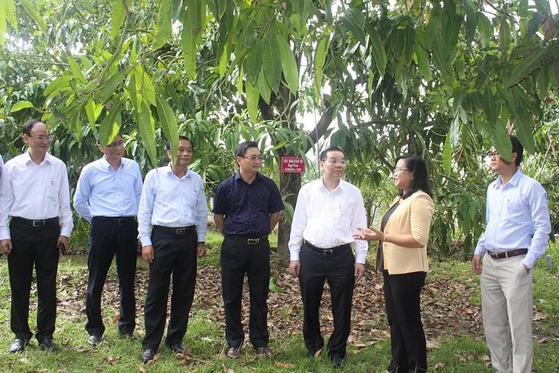 """Bộ trưởng Bộ KH&CN Chu Ngọc Anh đã đến thăm mô hình """"cây xoài nhà tôi"""". Với mô hình này, những cây xoài đẹp, năng suất tốt của xã viên được lựa chọn chào bán trên website, khách hàng ưng ý sẽ """"mua"""" trong vòng một năm và gửi người bán chăm sóc, đến kỳ thu hoạch người mua sẽ nhận đủ sản lượng theo cam kết."""