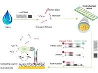 Công nghệ EFIRM cho phép phát hiện 2 chỉ dấu đột biến yếu tố tăng trưởng biểu bì - p.L858R và Exon 19del - Ảnh: Đại học California