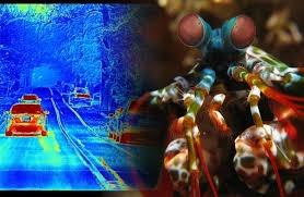 Một chuyến đi trên đường trong sương mù, ảnh thu được từ camera phân cực (trái) và hình tôm con bọ ngựa (phải) - Ảnh: Wikimedia Commons