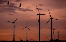 Nhà máy điện gió làm giảm số lượng các loài động vật sống xung quanh nơi nó được xây dựng và vận hành - Ảnh : PxHere