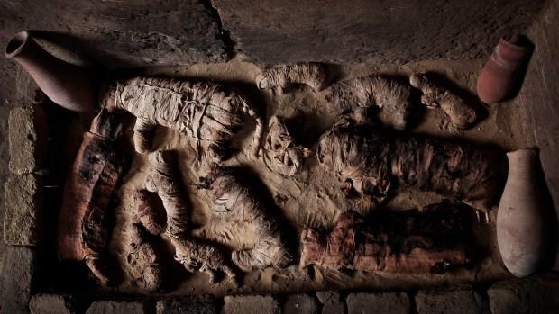 Hàng chục xác ướp mèo được phát hiện. (Nguồn: AP)