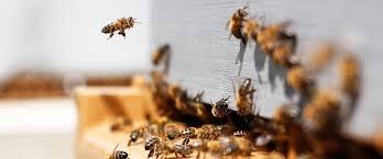Để ngăn chặn sự tuyệt chủng của các loài côn trùng thụ phấn, kể cả đàn ong, một số quốc gia áp đặt lệnh cấm thuốc trừ sâu - Ảnh: greenbelarus.info