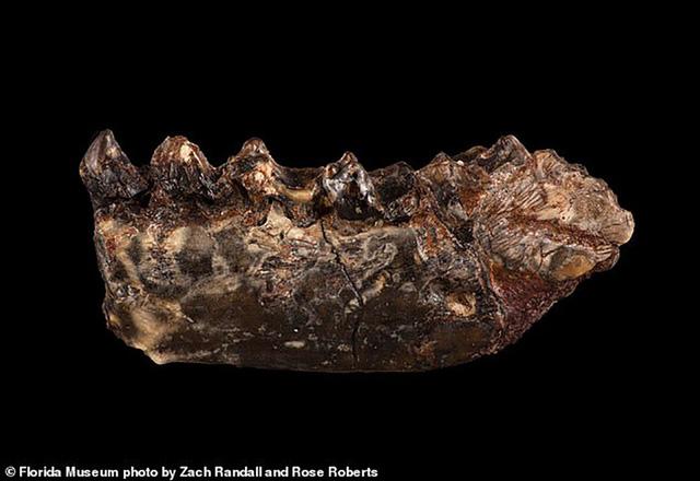 Hoá thạch của loài sinh vật mới được tìm thấy ở Bắc Mỹ.