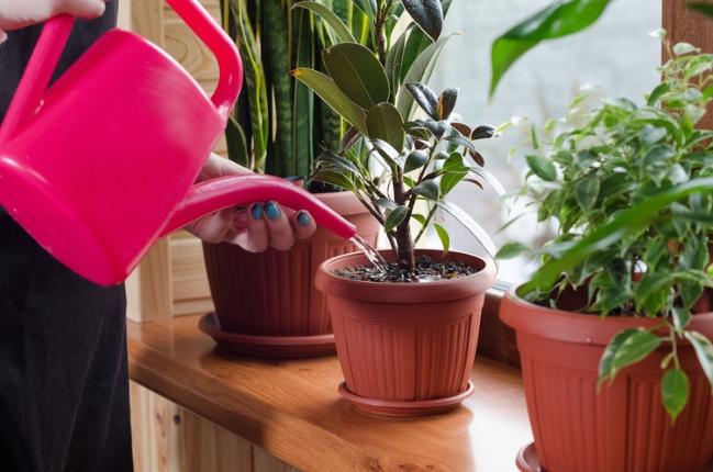 Cây cảnh trồng trong nhà trong tương lai có thể trở thành 'máy' lọc không khí - Ảnh: Internet