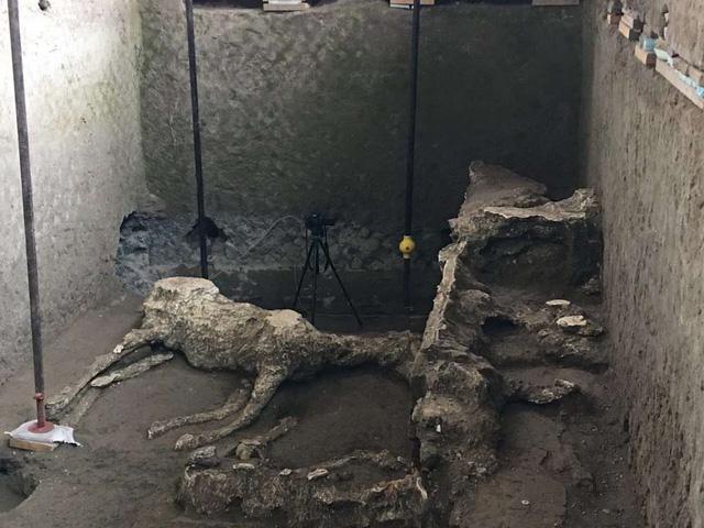 Khu vực phát hiện ra xác các con ngựa cổ.