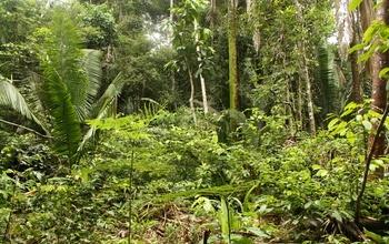 Rừng nhiệt đới chắc chắn có một cơ chế ngăn chặn sự chiếm ưu thế và thống trị của một loài cây duy nhất - Ảnh : Đại học Massachusetts