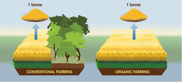 Theo nghiên cứu này, canh tác hữu cơ cho năng suất thấp hơn đáng kể, dẫn đến lượng khí CO2 gián tiếp thải ra từ nạn phá rừng nhiều hơn. Mặc dù khí thải trực tiếp từ nông nghiệp hữu cơ thường thấp hơn, do ít sử dụng năng lượng hóa thạch. Hình: Yen Strandqvist/Đại học Công nghệ Chalmers.