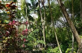 Khi khí hậu nóng lên, tốc độ xử lý sinh khối trong các cánh rừng nhiệt đới đã chậm lại, không giải phóng thêm carbon dioxide - Ảnh: Miguel Discart