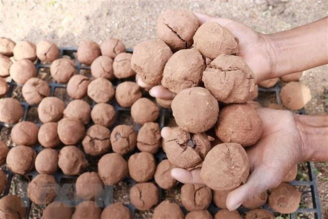 """""""Bom hạt giống"""" có thành phần gồm đất trộn phân bò ủ, hạt giống cây tra ở giữa rồi vo viên. (Ảnh: Nguyễn Thành/TTXVN)"""
