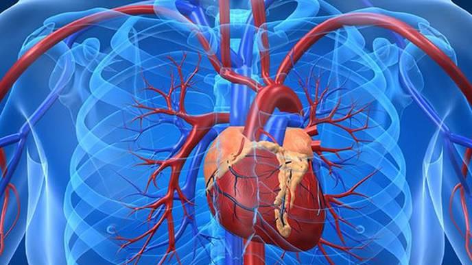 Các nghiên cứu và dữ liệu về tế bào gốc tim có thể không đáng tin cậy