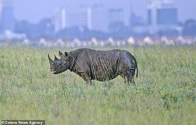 Những loài động vật to lớn hiện tại có xu hướng di chuyển bằng mũi chân.