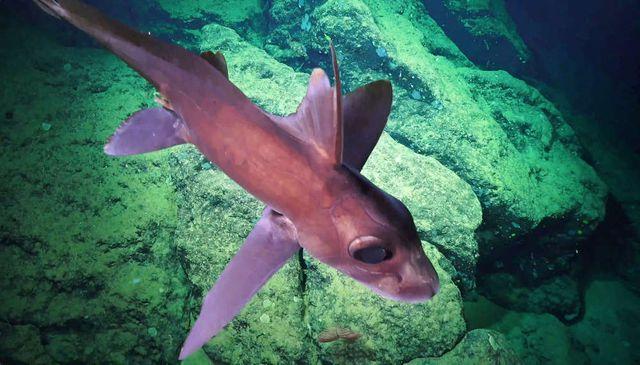 Một trong những loài cá mới được phát hiện.