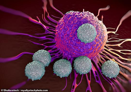 """Thuốc mới sẽ nhắm vào các cấu trúc bề mặt của tế bào ung thư, rồi lén thả một """"chú ngựa thành Troy"""" vào để tiêu diệt tế bào bệnh từ bên trong - ảnh: SHUTTERSTOCK"""