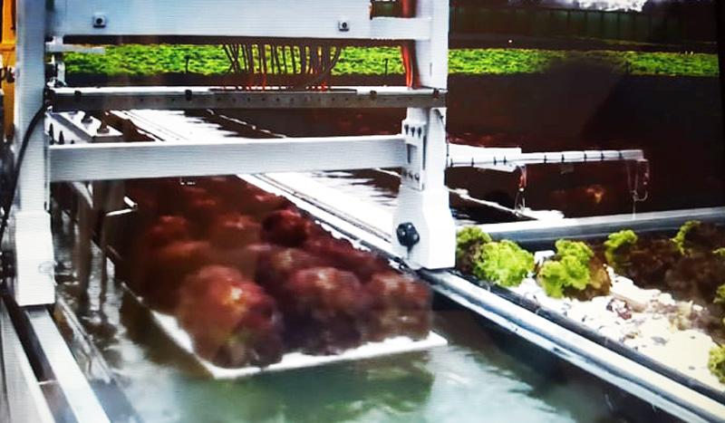Mô hình trồng rau TCNS của .. hoàn toàn tự động