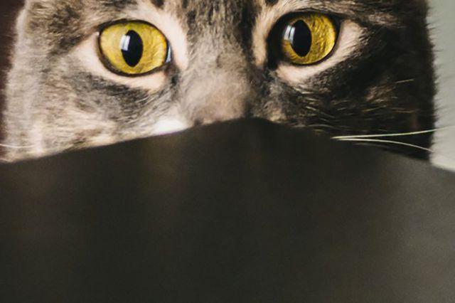 """Mèo có thể là """"bản sao tính cách"""" chủ nhân của chúng."""