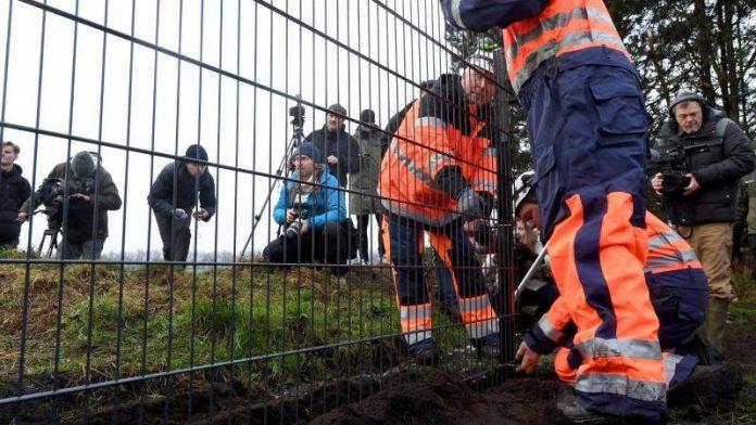 Đan Mạch dựng hàng rào ở biên giới để ngăn lợn rừng có khả năng mang mầm bệnh vào trong nước. Ảnh: TIME