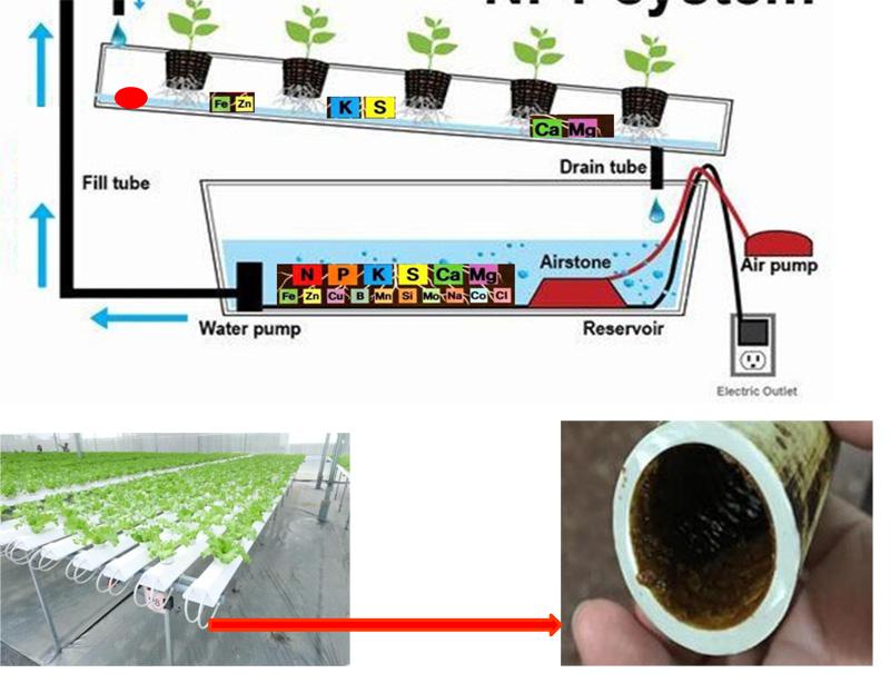 Trồng rau thủy canh hay bị cặn trong các đường ống