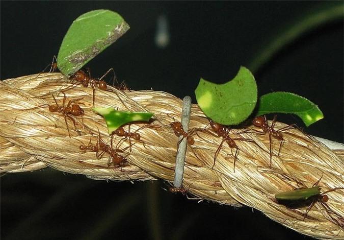 Loài kiến ăn gì?