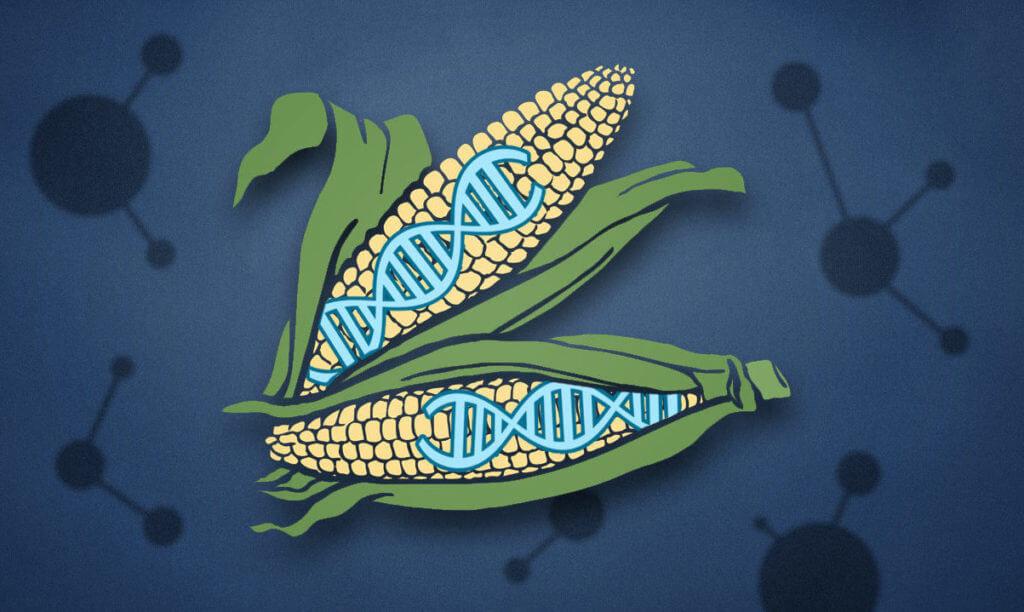 Vẫn còn tồn tại nhiều mối nghi ngại của người tiêu dùng về sự an toàn của thực phẩm chỉnh sửa gene. Ảnh: Genetic Literacy Project.
