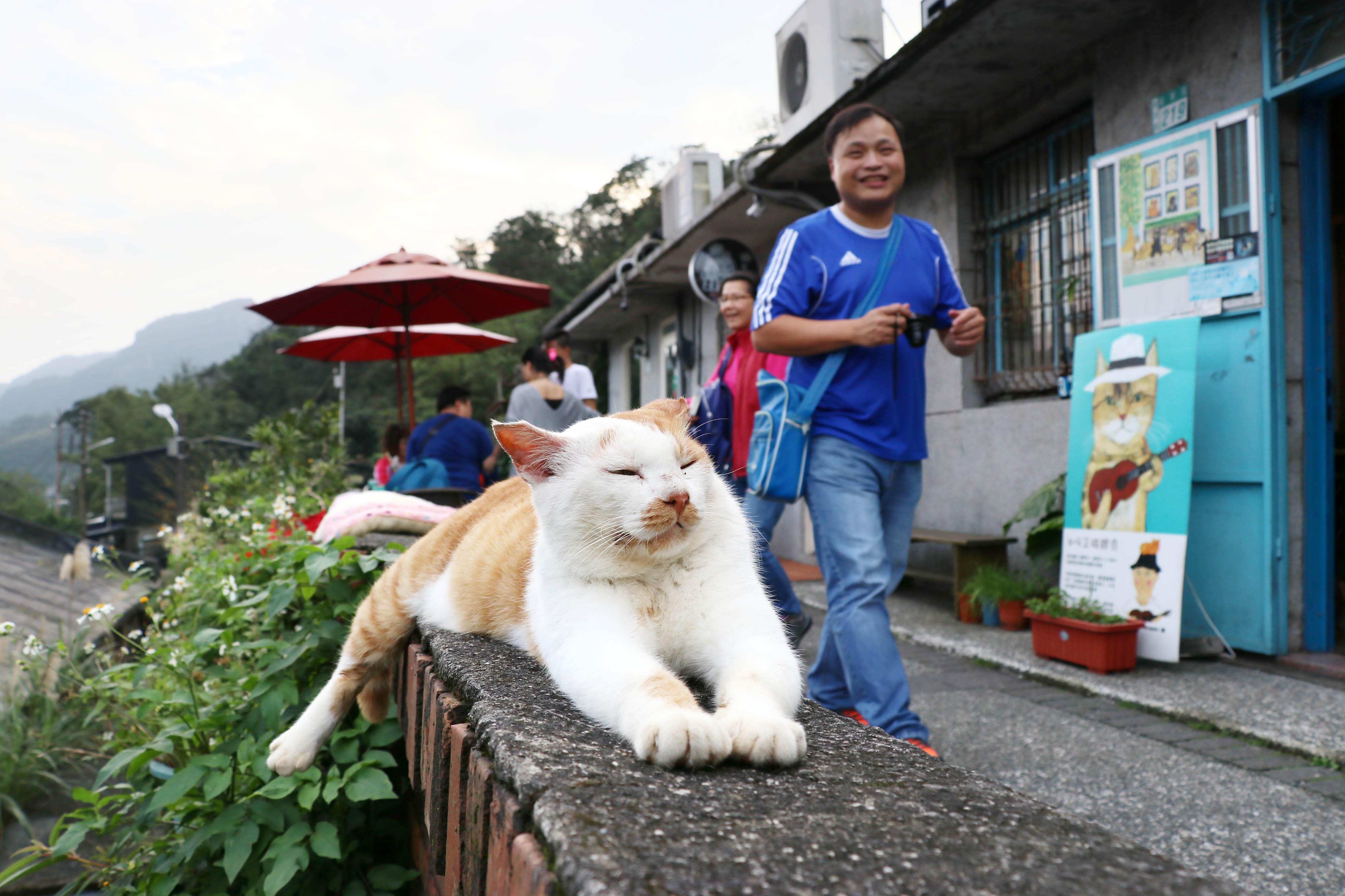 Những chú mèo đi lạc hoặc bị bỏ rơi đã vực dậy cả một thị trấn hoang vắng. Ảnh: Asia Nikkei Review.