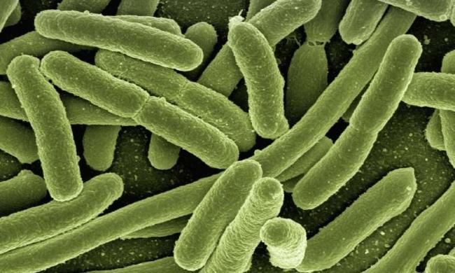 Vi khuẩn có thể biến chất thải độc hại thành các chất ít nguy hiểm hơn và sản xuất điện trong quá trình này - Ảnh: CCO Public Domain