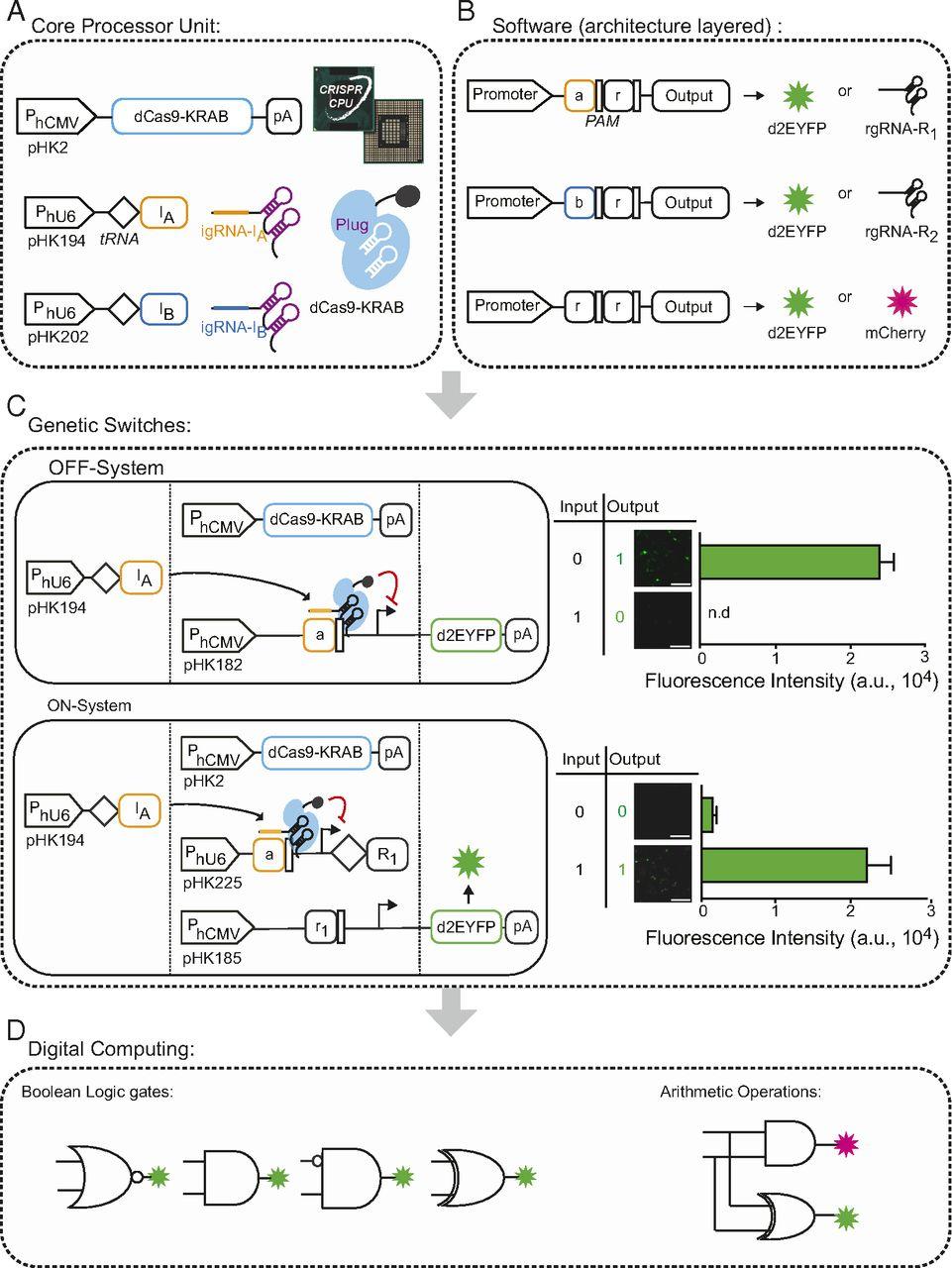 Nguyên lý hoạt động của máy tính tế bào. Ảnh: ETH Zurich.