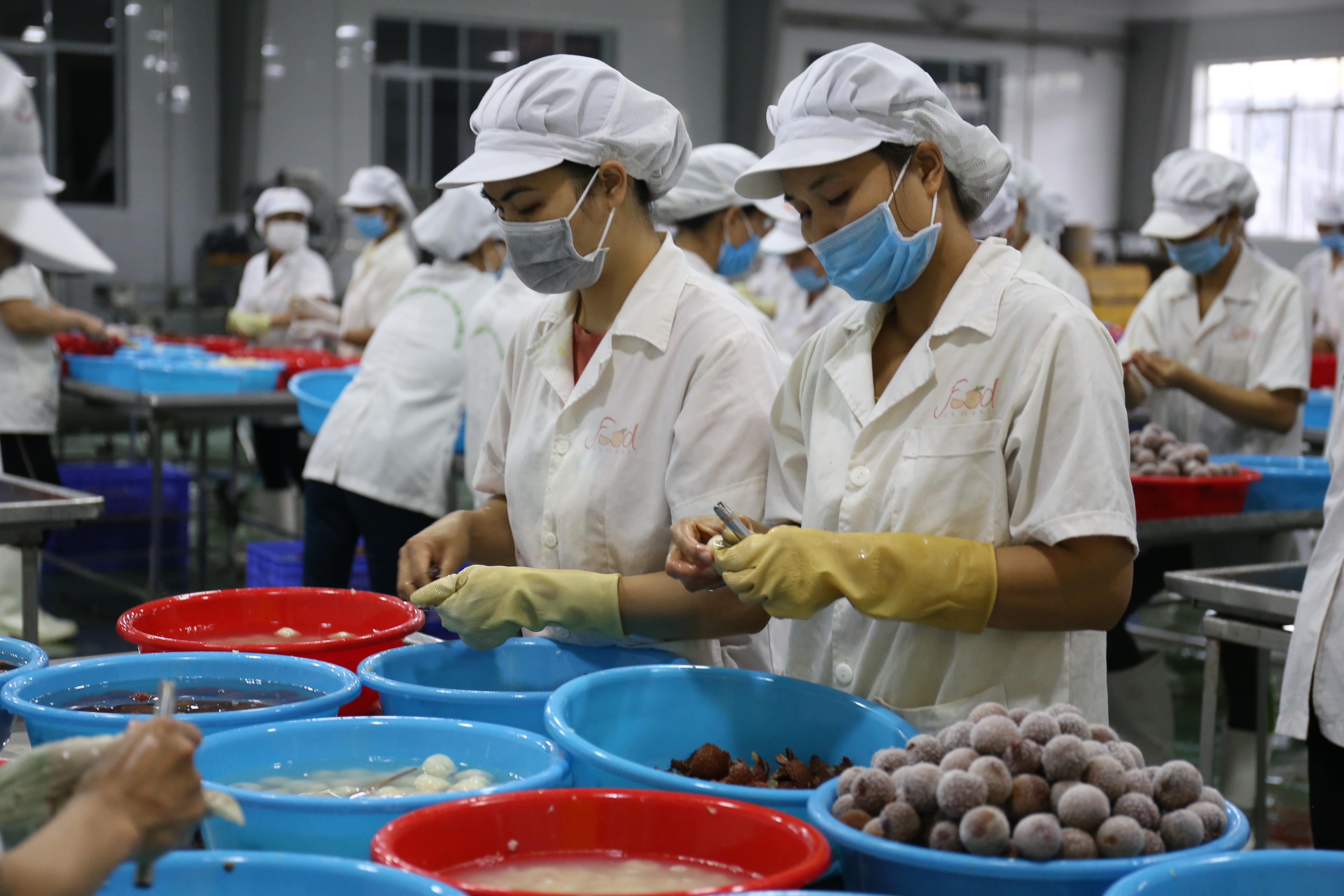 Nhân viên của công ty Xuất nhập khẩu Toàn cầu đang bóc vỏ vải để làm cùi cấp đông. Đây là vải đông lạnh từ tháng 6/2018, ông Nguyễn Hữu Tuyết, Phó TGĐ công ty cho biết, một khi đã để kho một năm rồi mới chế biến thì lợi nhuận không còn đáng kể. Ảnh: Hoàng Nam.
