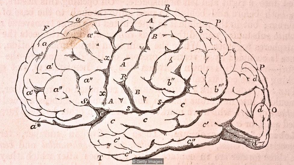 Não người có khoảng 100 tỷ tế bào thần kinh và bộ não người được coi là khổng lồ so với tương quan cơ thể nhỏ bẻ của chúng ta.