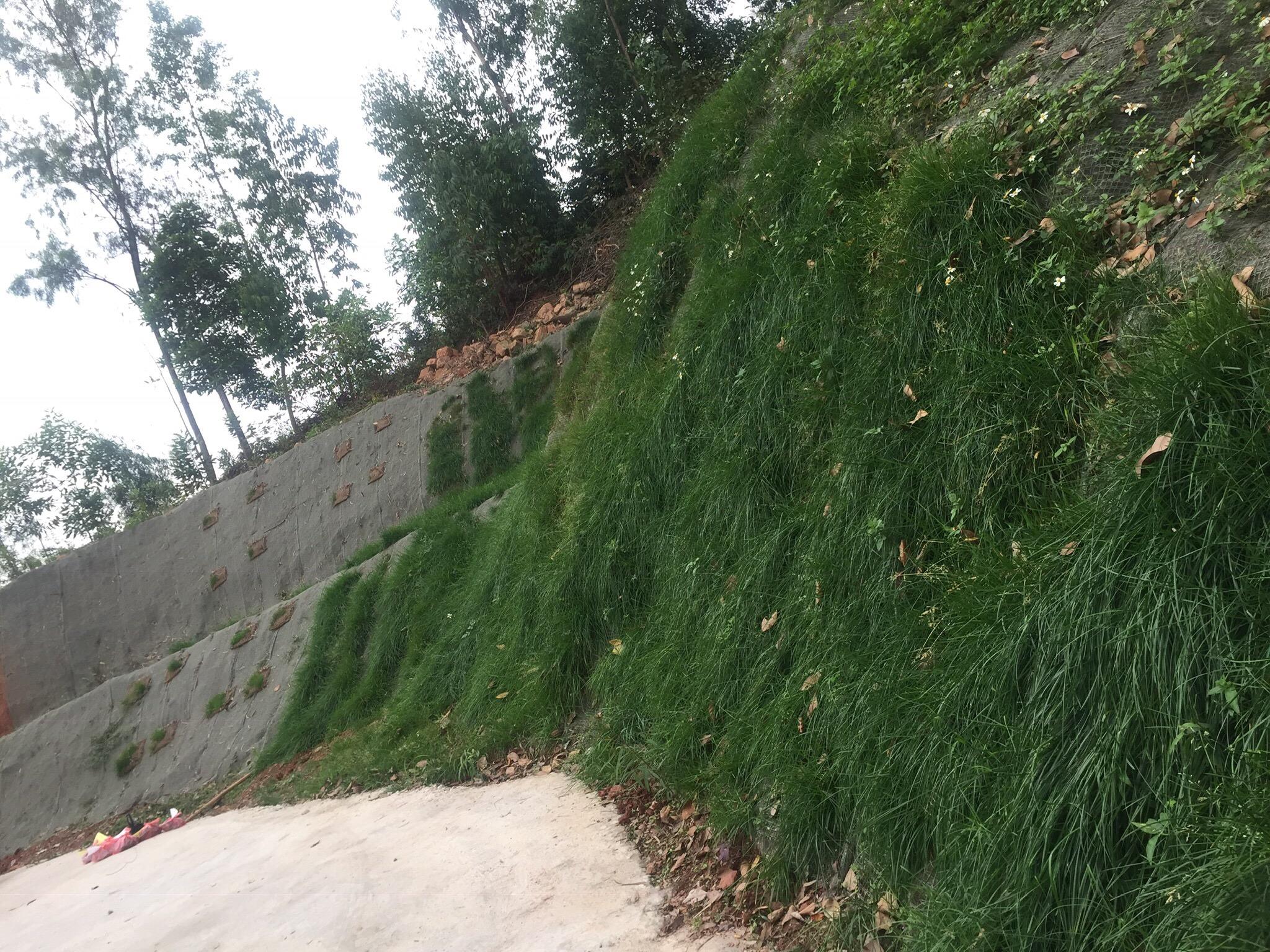 Vùng thử nghiệm chế phẩm nấm rễ cộng sinh ở Bắc Giang