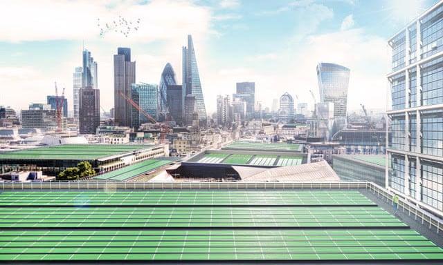 Các mái nhà được phủ bằng lá quang sinh học. Ảnh: Arborea