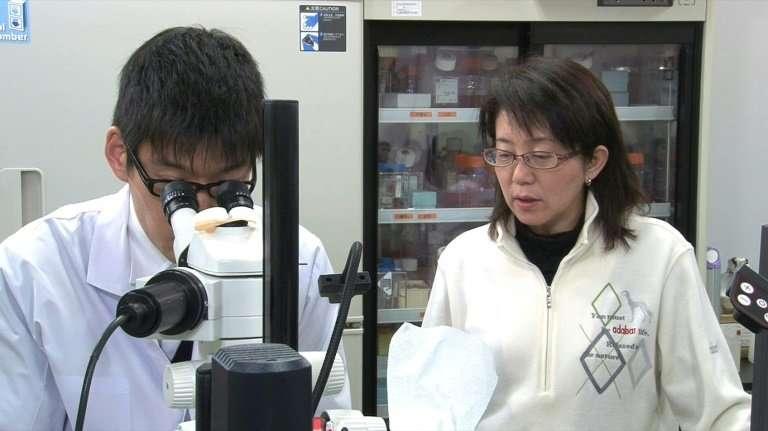 """Viện RIKEN là một trong những nơi nghiên cứu có nhiều đột phá của thế giới về tế bào gốc """"vạn năng cảm ứng"""" (Induced Pluripotent Stem Cells- iPSC). Nguồn: RIKEN"""