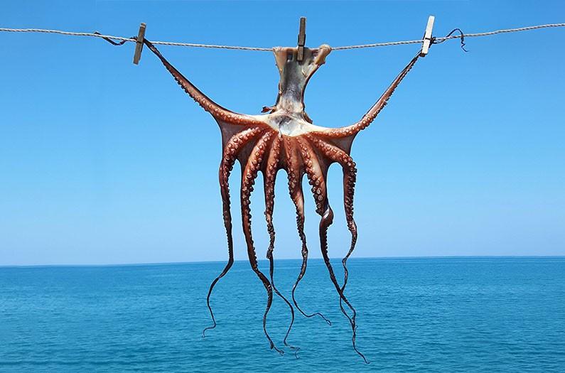 Nuôi bạch tuộc trong trang trại không chỉ là vấn đề môi trường mà còn cả đạo đức