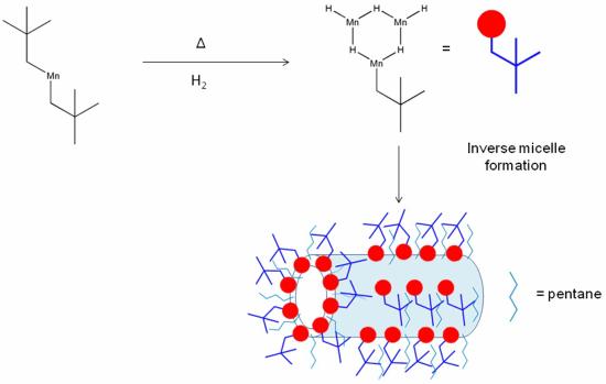 Sơ đồ biểu diễn sự hình thành cấu trúc nano KMH-1 bằng cơ chế tạo khuôn micelle nghịch đảo, được sinh ra từ quá trình tự ráp lại trong môi trường không phân cực. Skipper et al (2012)