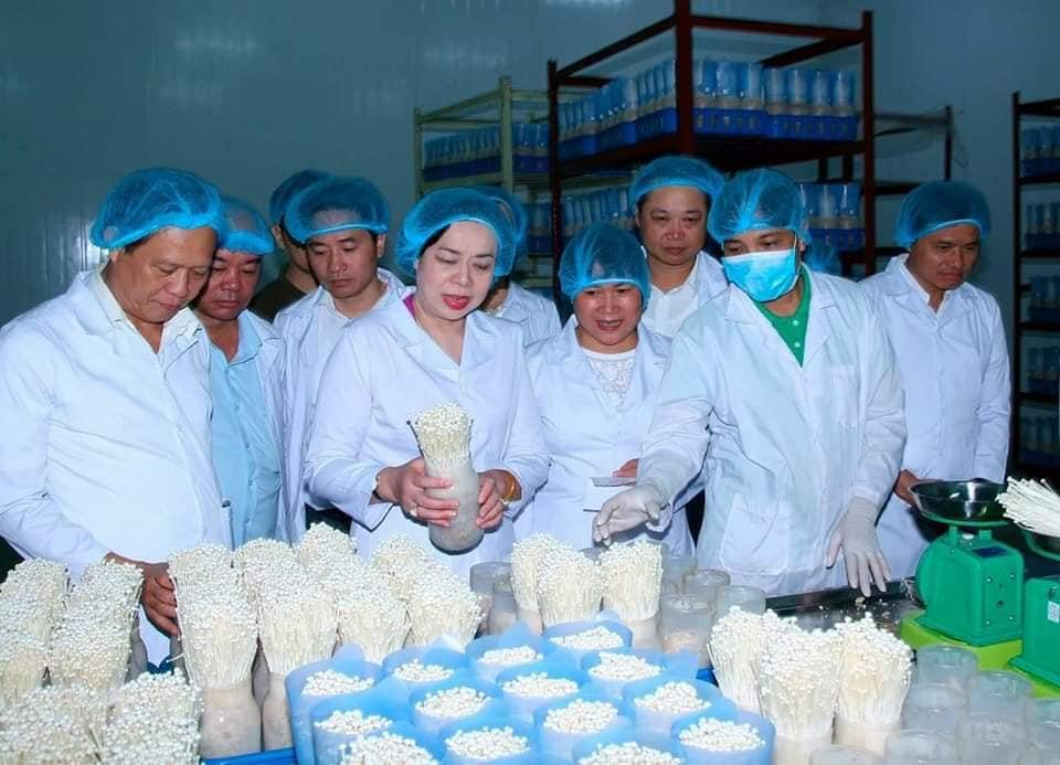 Công ty sản xuất nấm Kinoko Thanh Cao. Ảnh: Kinoko Thanh Cao.