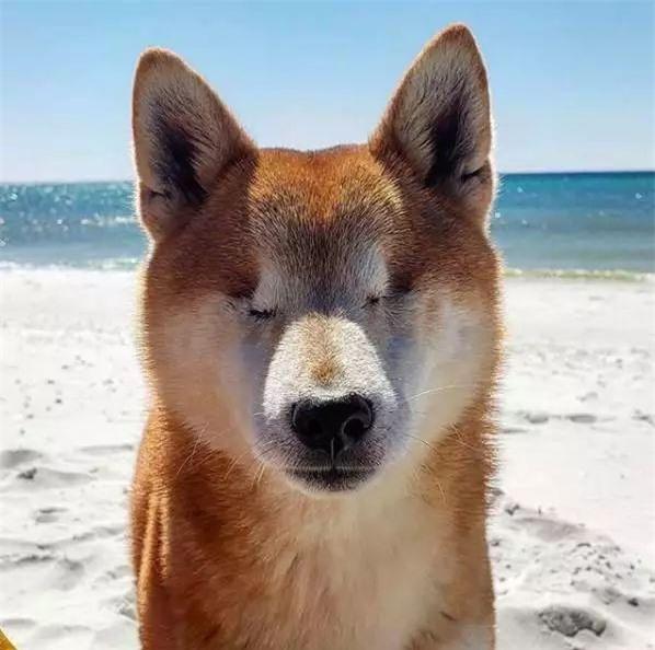 Câu chuyện của chú chó mù bị trầm cảm, được ông chủ cõng đi khắp thế giới cho khuây khỏa - Ảnh 2.