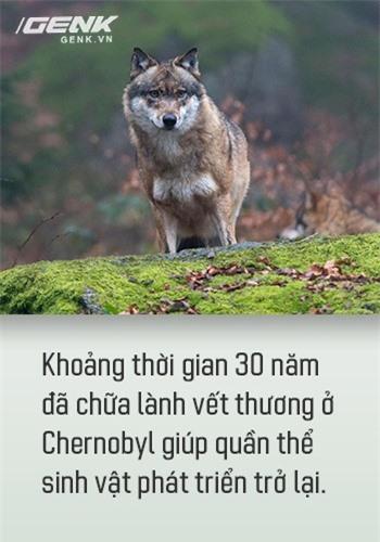 Từ địa ngục, Chernobyl nay trở thành thiên đường cho các loài động vật, có phải con người mới đáng sợ hơn cả hạt nhân? - Ảnh 13.