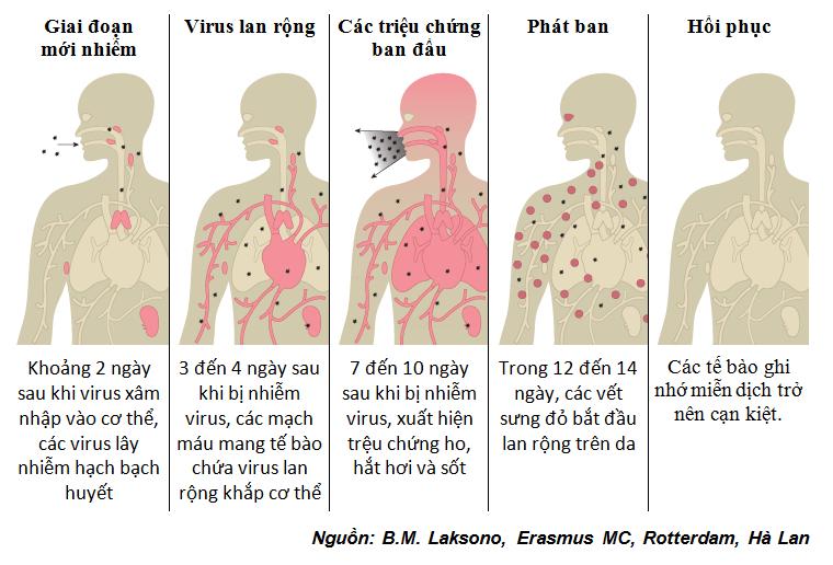 Chu kỳ virus bệnh sởi