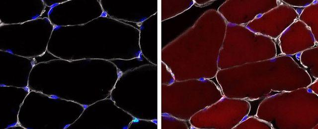 Các nhà khoa học vừa phát hiện ra phương pháp chỉnh sửa gene của tế bào gốc.