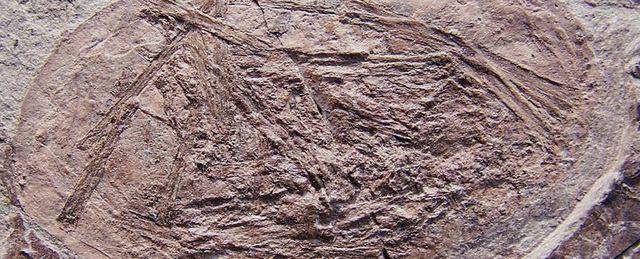 Các nhà nghiên cứu vừa tìm thấy hoá thạch một loài sinh vật có khả năng bay ngay khi mới sinh ra.