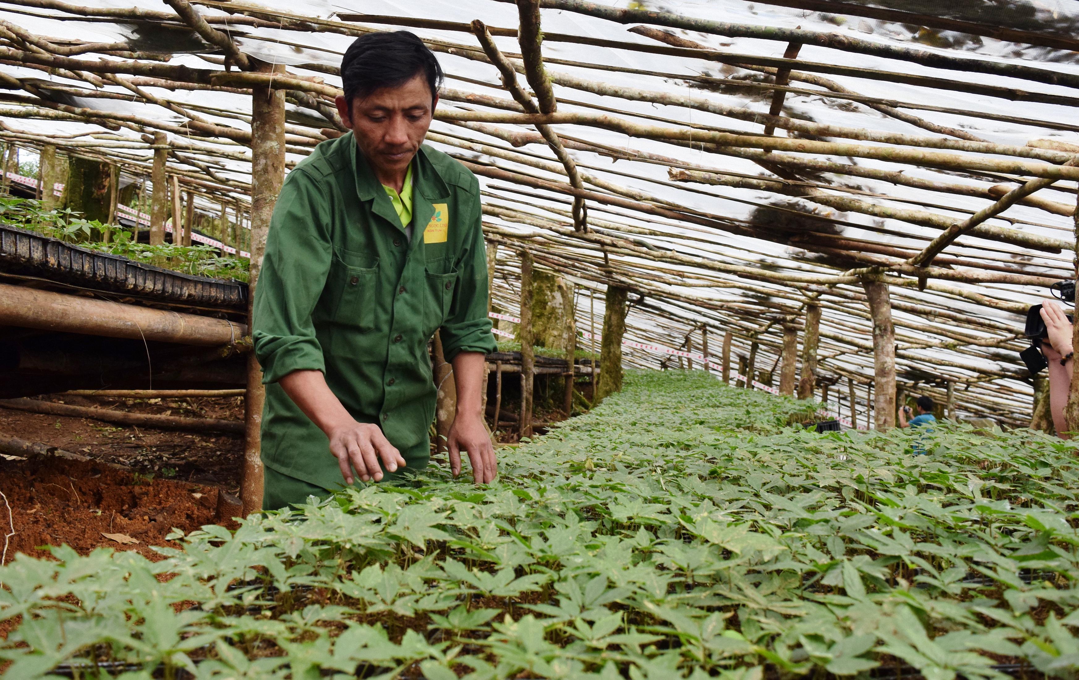 Công nhân chăm sóc vườn sâm giống của Công ty Cổ phần sâm Ngọc Linh Kon Tum tại huyện Tu Mơ Rông. Ảnh: VGP/Bạch Dương