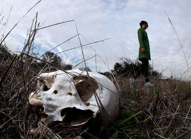 Trang trại tử thi ở San Marcos, Texas, một trong số các trang trại ở Hoa Kỳ.