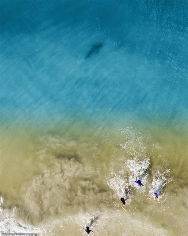 Chụp ảnh drone trên biển, ông bố phát hiện mối hiểm họa chỉ cách vài mét và bắt các con chạy lên bờ ngay lập tức - Ảnh 2.