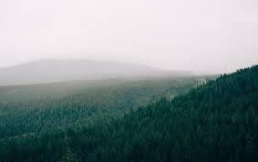 Trên Trái đất có thể mở rộng được 0,9 tỉ ha trồng cây, kiềm chế tình trạng nóng lên toàn cầu - Ảnh: Pixabay