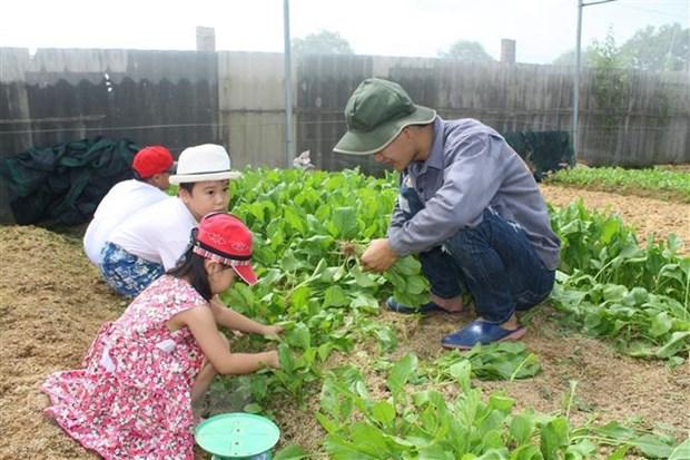 Trẻ em được đến tham quan và trải nghiệm thu hoạch rau sạch tại trang trại Sunny Farm – mô hình trồng rau theo hướng hữu cơ tại phường 12, thành phố Vũng Tàu. (Ảnh: Hoàng Nhị/TTXVN)