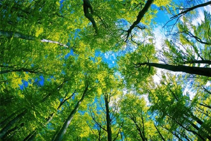 Để cứu lấy Trái Đất: mục tiêu trồng thêm cây đơn thuần thôi là chưa đủ