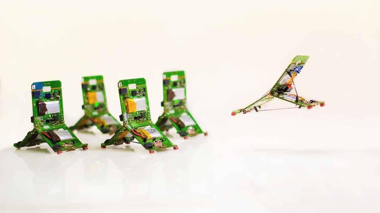 Robot hoạt động giống kiến thật