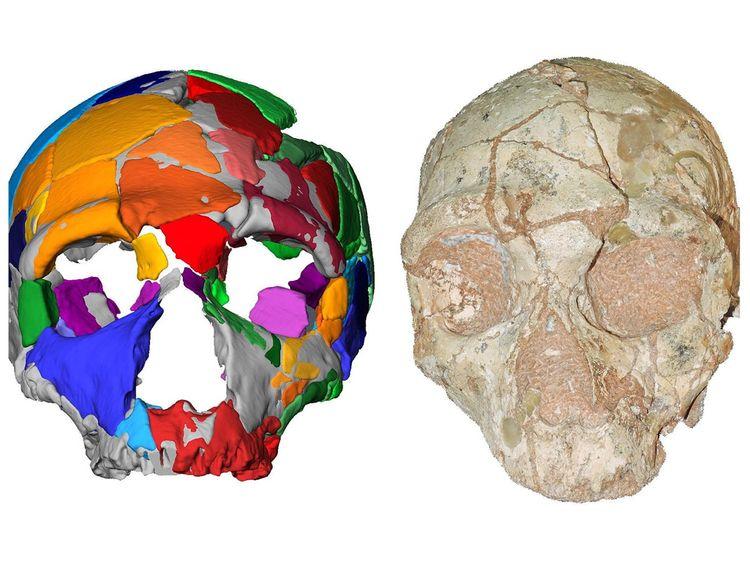Hộp sọ được kiểm tra bằng mô hình máy tính. Ảnh: AFP.