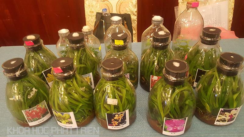 Nuôi cấy mô các giống rau, hoa là một trong những thế mạnh của AHTP