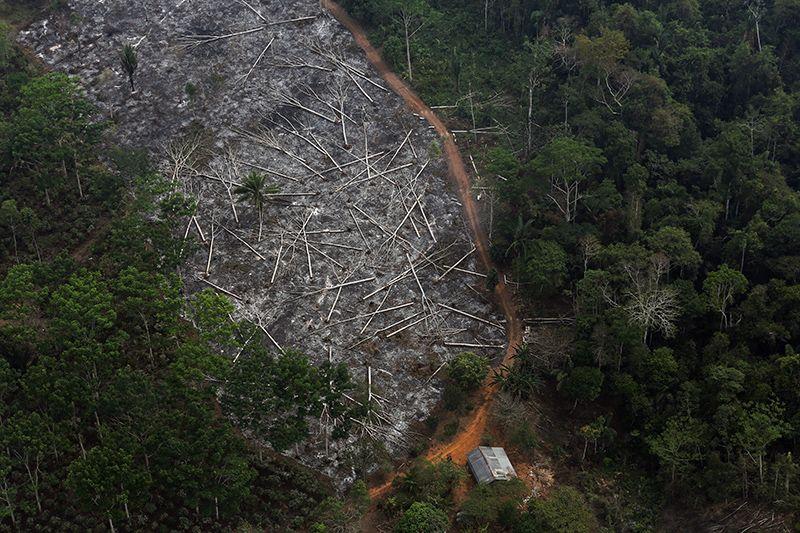 Nạn phá rừng ở Brazil ngày một gia tăng