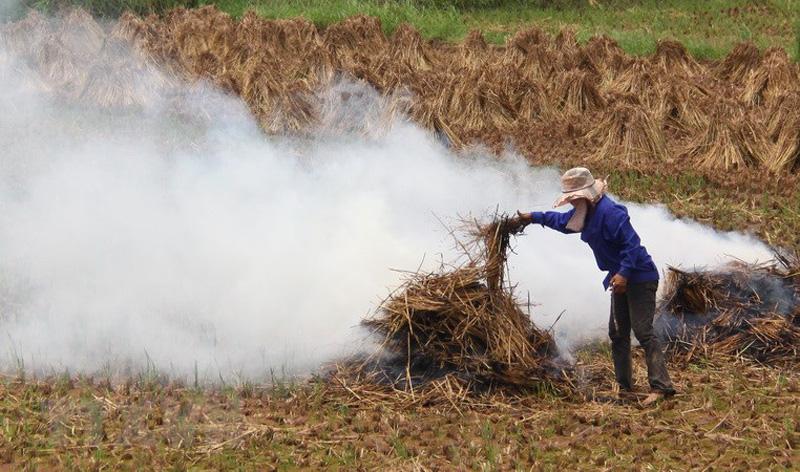 Phần lớn rơm rạ được đốt bỏ ngay tại đồng ruộng